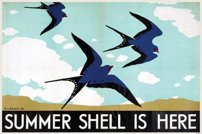 Summer Shell is Here