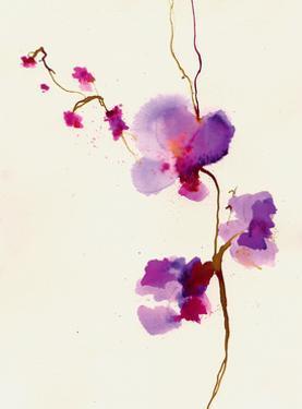 Velvet Orchid by Summer Thornton