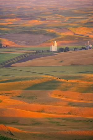 https://imgc.allpostersimages.com/img/posters/summer-wheat-barley-and-lentil-fields-washington-palouse-area_u-L-PU3GD60.jpg?p=0
