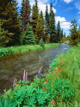 Summer wildflowers bloom along the upper Deschutes River, Deschutes National Forest, Oregon, USA