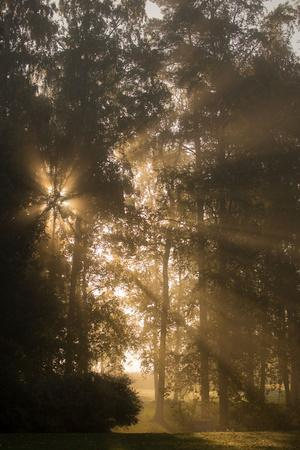 https://imgc.allpostersimages.com/img/posters/sun-rays-shining-between-trees-in-foggy-autumn-morning_u-L-Q1EXVHO0.jpg?artPerspective=n