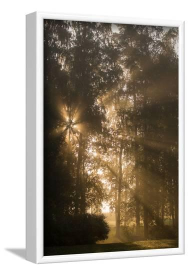 Sun rays shining between trees in foggy autumn morning-Paivi Vikstrom-Framed Photographic Print