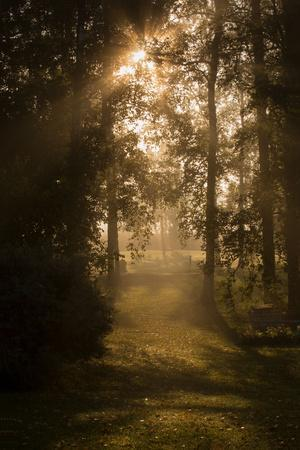 https://imgc.allpostersimages.com/img/posters/sun-rays-shining-between-trees-in-foggy-autumn-morning_u-L-Q1EXW1L0.jpg?artPerspective=n
