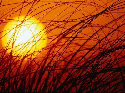 https://imgc.allpostersimages.com/img/posters/sun-rising-through-grass-fl_u-L-P3FX6Z0.jpg?artPerspective=n