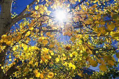 https://imgc.allpostersimages.com/img/posters/sun-through-autumn-leaves-switzerland-europe_u-L-PWFH2R0.jpg?p=0