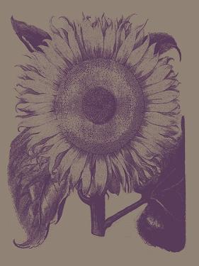 Sunflower, no. 14