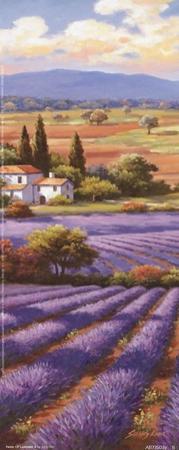 Fields Of Lavender II by Sung Kim