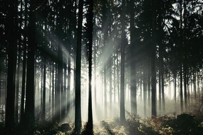 https://imgc.allpostersimages.com/img/posters/sunlight-in-the-autumnal-teutoburg-forest_u-L-Q1EXMLF0.jpg?artPerspective=n