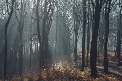 https://imgc.allpostersimages.com/img/posters/sunlight-in-the-autumnal-teutoburg-forest_u-L-Q1EXO490.jpg?artPerspective=n