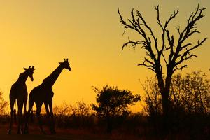 Sunrise in African Bush