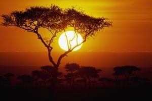 Sunrise on Masai Mara National Reserve