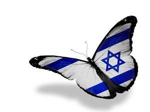 Israeli Flag Butterfly Flying, Isolated On White Background by suns_luck