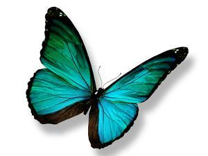 Turquoise Butterfly by suns_luck