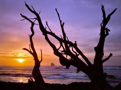 https://imgc.allpostersimages.com/img/posters/sunset-framed-by-driftwood-cape-meares-oregon-usa_u-L-PN6XJ20.jpg?p=0