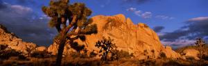 Sunset, Joshua Tree National Park, California, USA