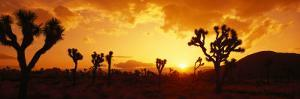 Sunset, Joshua Tree Park, California, USA