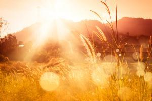 Sunset over Mountain with  Feather Pennisetum or Mission Grass Backlitght Glow against the Sunlight