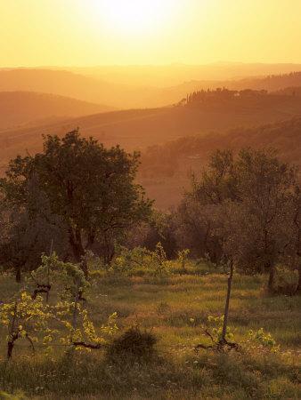 https://imgc.allpostersimages.com/img/posters/sunset-over-vineyards-near-panzano-in-chianti-chianti-tuscany-italy-europe_u-L-P7MQG00.jpg?p=0