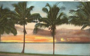 Sunset, Palm Trees, Florida