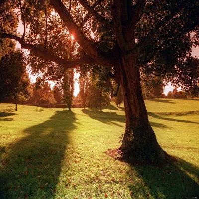 https://imgc.allpostersimages.com/img/posters/sunset-park-in-essex_u-L-P5F3EZ0.jpg?p=0