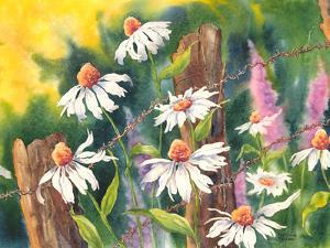 Daisy Dance by Sunshine Taylor