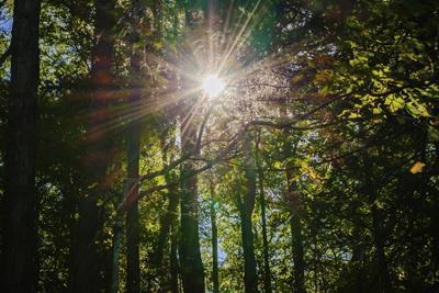 https://imgc.allpostersimages.com/img/posters/sunshine-through-trees_u-L-Q1GTKAJ0.jpg?p=0