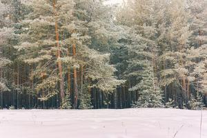 Wintry Landscape Scenery with Flat County and Woods, Snow Landscape Background for Retro Christmas by Supertrooper