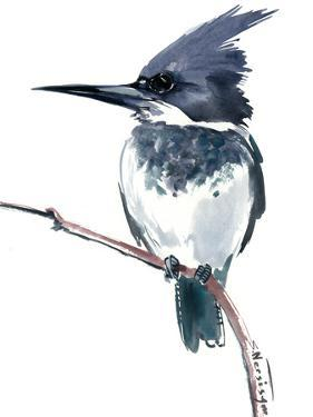 Belted Kingfisher 2 by Suren Nersisyan