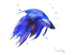 Betta Fish by Suren Nersisyan