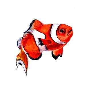 Clown Fish by Suren Nersisyan
