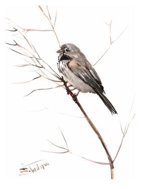 Field Sparrow by Suren Nersisyan