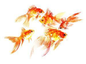 Goldfish5 by Suren Nersisyan