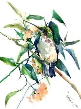 Hummingbird Suren by Suren Nersisyan