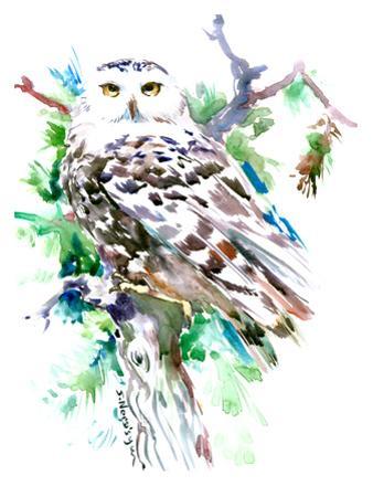 Northern Owl by Suren Nersisyan