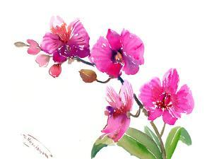 Pink Orchids 1 by Suren Nersisyan