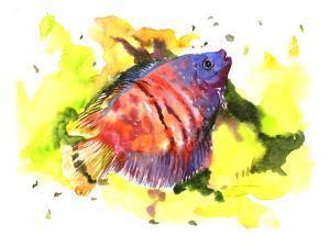 Red Dwarffish by Suren Nersisyan