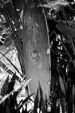 Surfing Shrine in Garden Black White Photo Poster Print