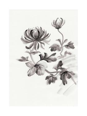 Chrysanthemum Flower by Surovtseva