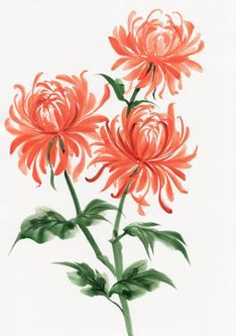 Orange Chrysanthemum by Surovtseva