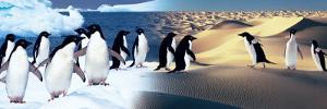 Surreal Penguin Landscape