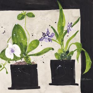 Hothouse Orchids I by Susan Brown