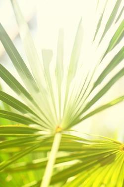 Among Palms I by Susan Bryant