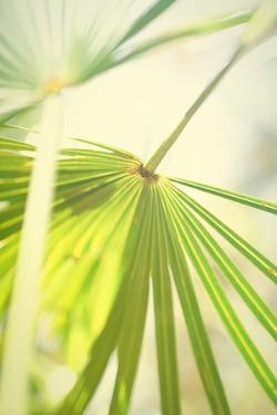Among Palms II by Susan Bryant