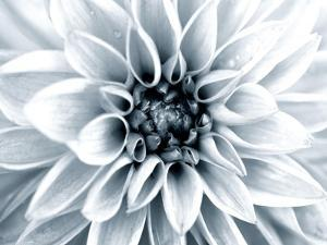 Bright White Bloom by Susan Bryant