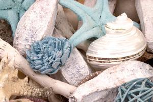 Bundle of Shells II by Susan Bryant