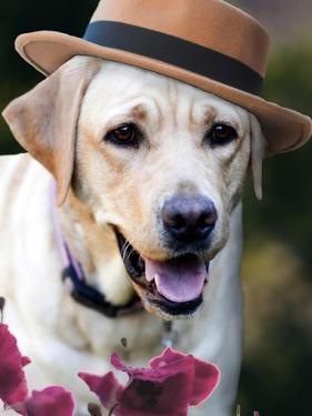 Dapper Dog by Susan Bryant