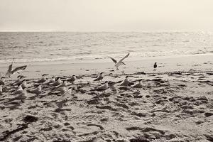 Dream of the Beach II by Susan Bryant