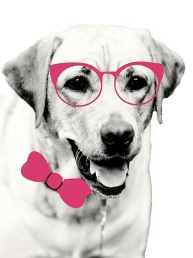 Pink Pop on Pup by Susan Bryant