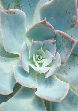 Teal Succulent Vertical by Susan Bryant