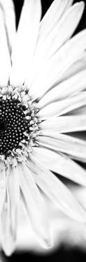 White Bloom I by Susan Bryant